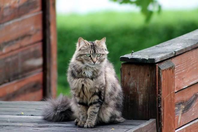 Все кошки возвращаются домой