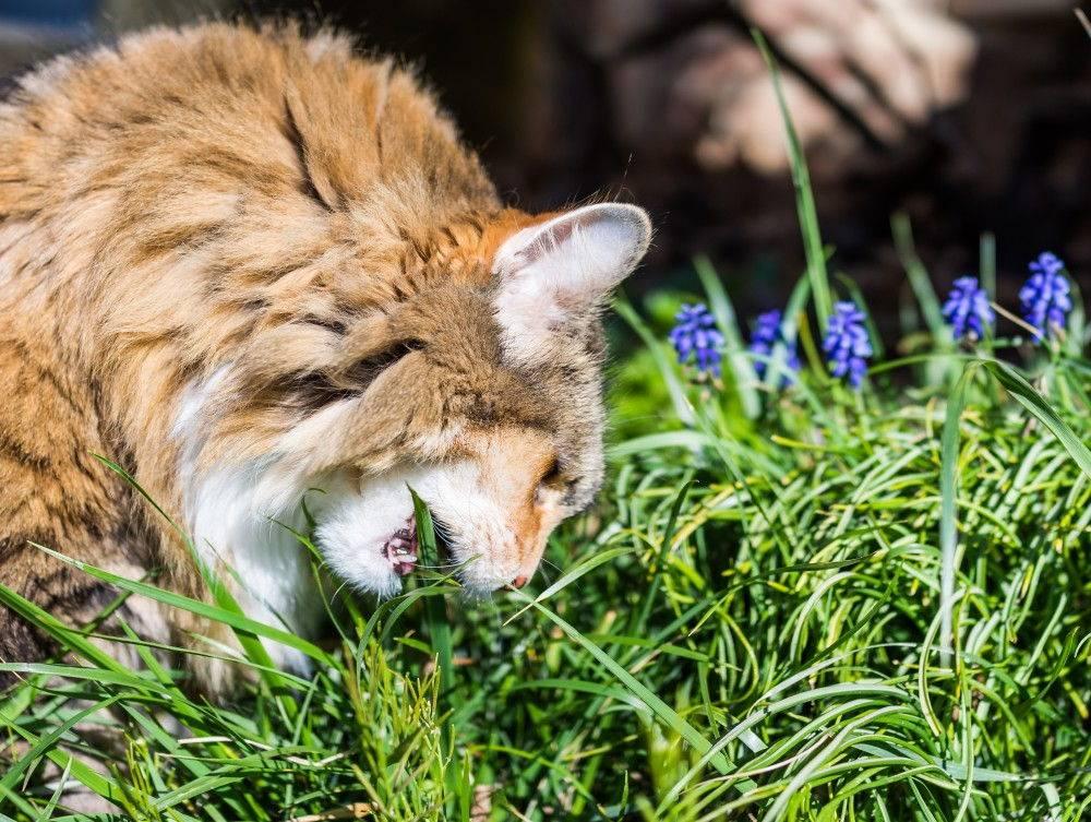 Какую траву любят кошки?