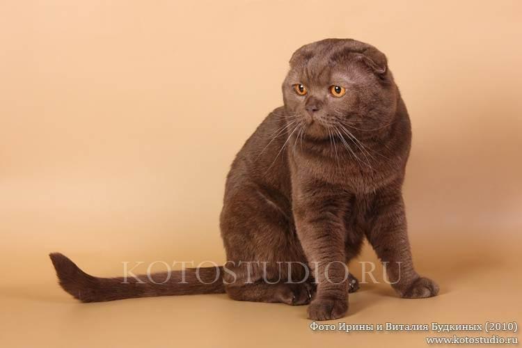 Ems коды пород и окрасов кошек (wcf) — циклопедия