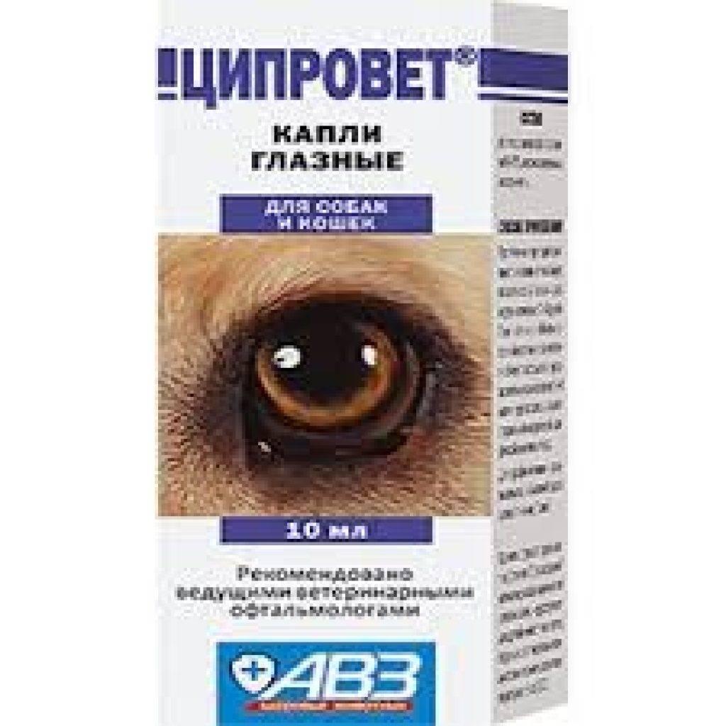 Лечение воспаление глаз у кошек