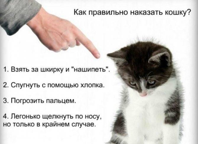 Как отучить кота гадить в неположенном месте. 3 способа