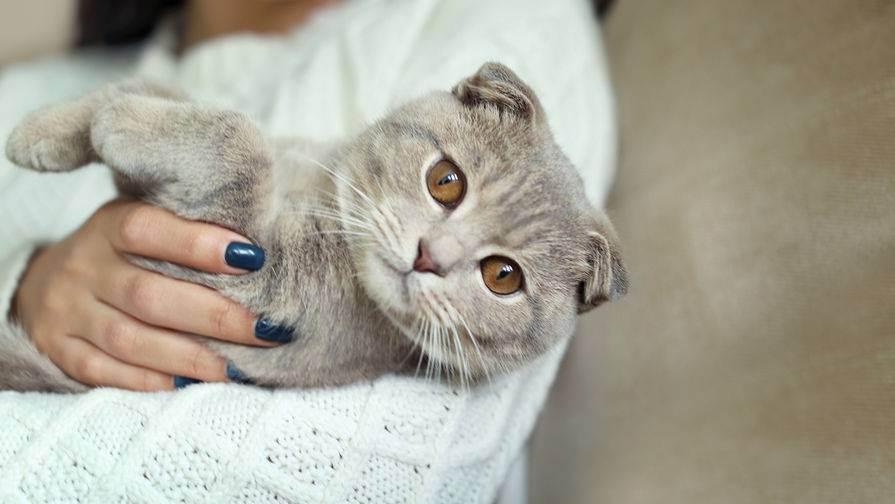 Основные законы котофизики.: дневник группы «кошки - это кошки»: группы - женская социальная сеть myjulia.ru
