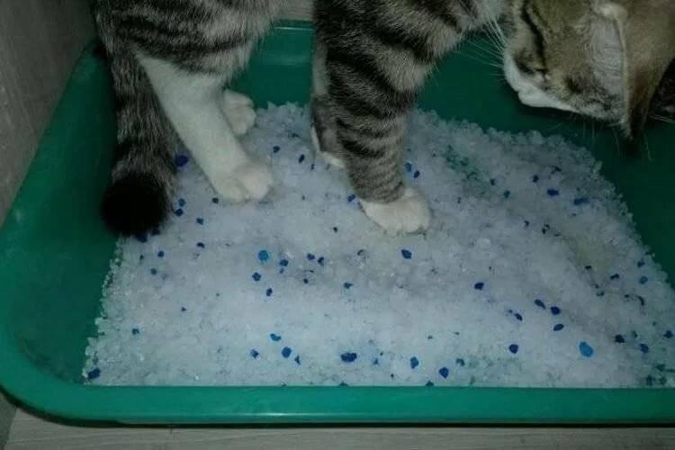 Кот ест наполнитель для туалета, что делать?