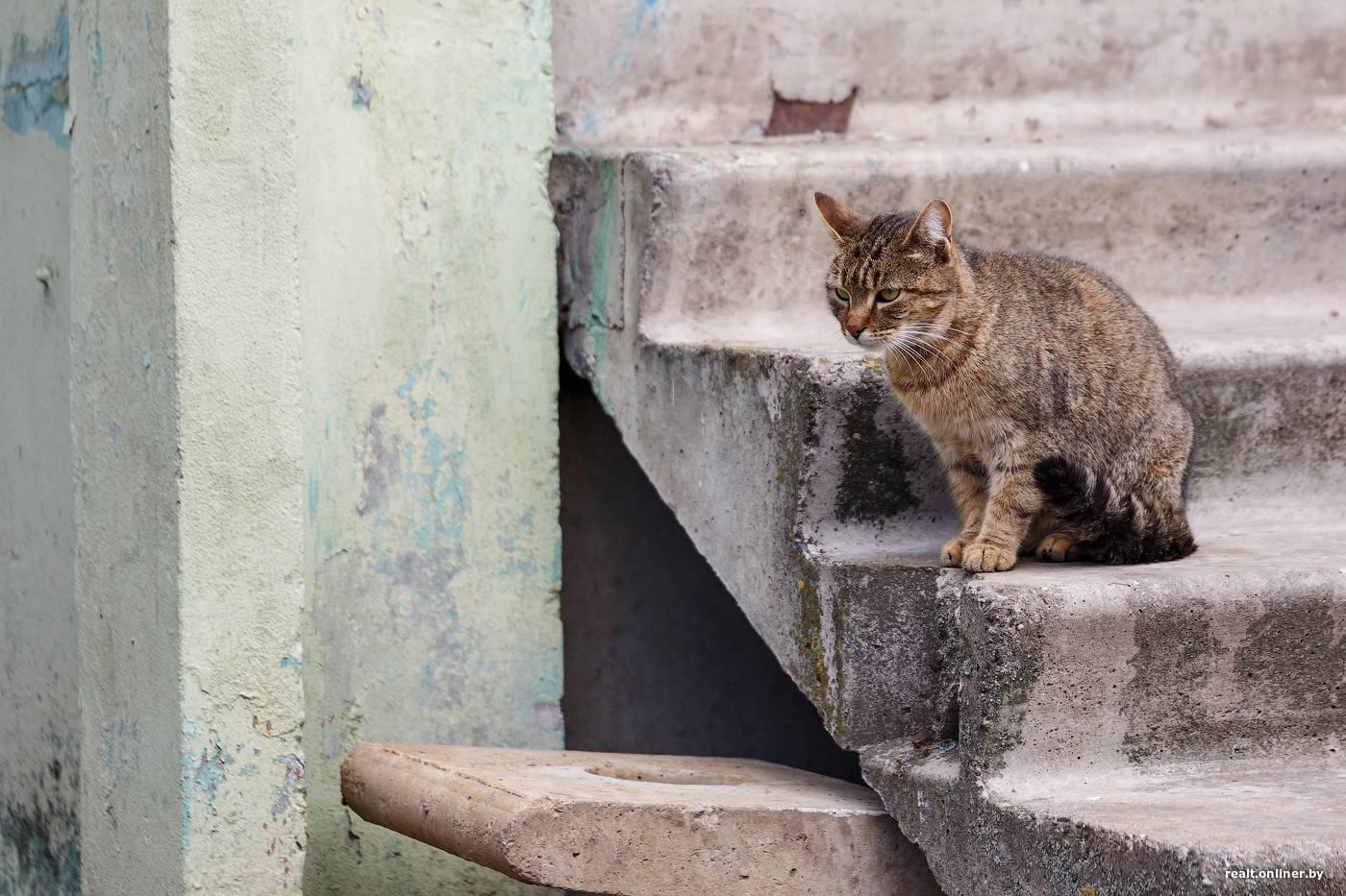 Почему стерилизованным кошкам нельзя есть рыбу — минтай для кошек