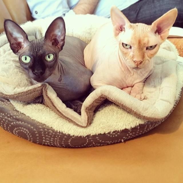 Самые интересные факты о кошках, которые стоит знать их владельцам
