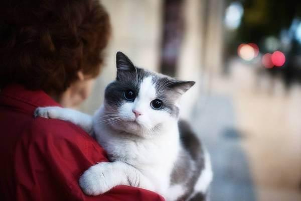 Возраст кошки по человеческим меркам: таблица