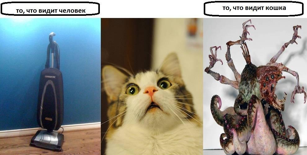 Что видят кошки, чего не видят люди? что скрыто для наших взоров, что могут видеть кошки.