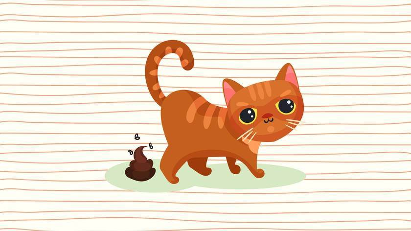 Врачи рассказали, почему заводить кошек опасно для жизни людей