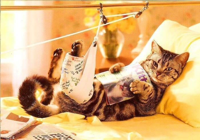 Кот ездит на попе. почему кошка ездит на попе: выясняем причины недомогания