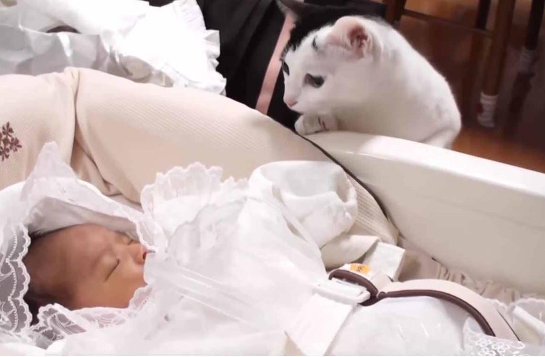 Кот и новорожденный в одном доме