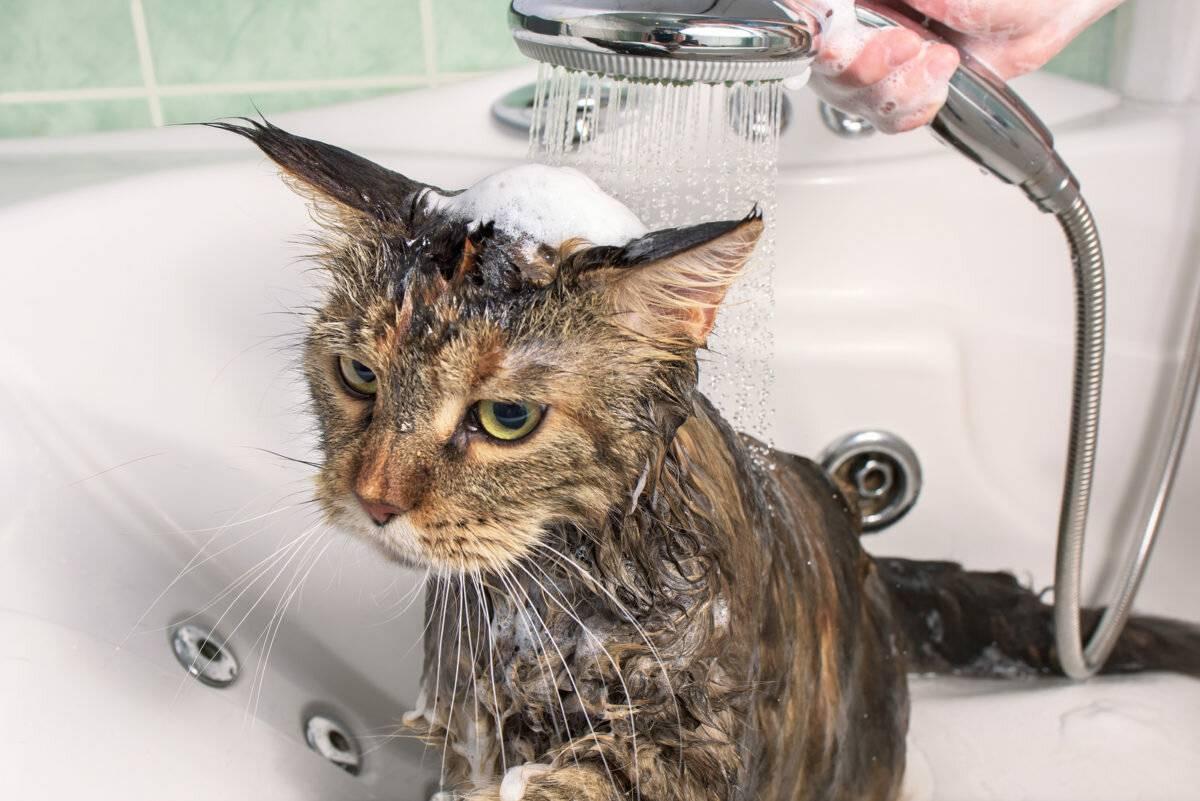 Как высушить кота после купания