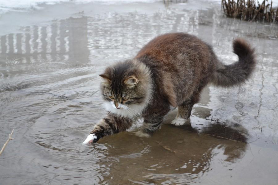 Сколько воды должна пить кошка в сутки