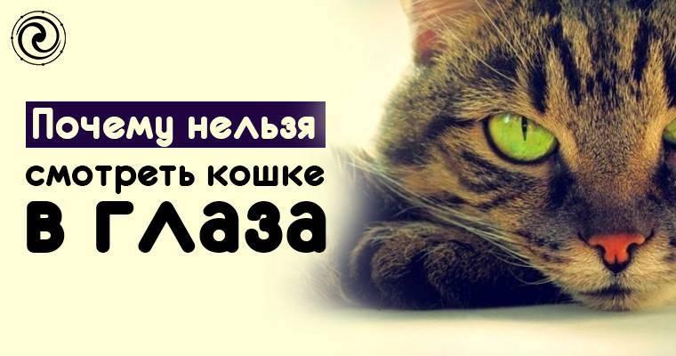 Почему кошкам нельзя долго смотреть в глаза?