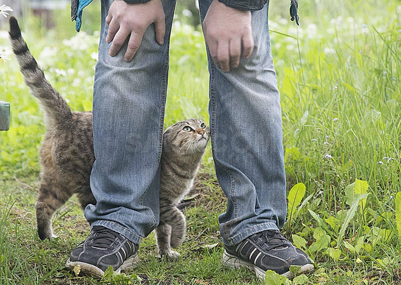 Почему кошки вылизывают людей, зачем они лижут хозяину руки, лицо или ноги?