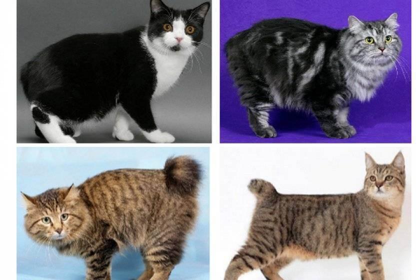 Как определить породу кошек и котов?