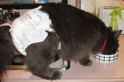 Как сделать выбор сухого корма для собак и кошек, корм для котёнка — первый выбор