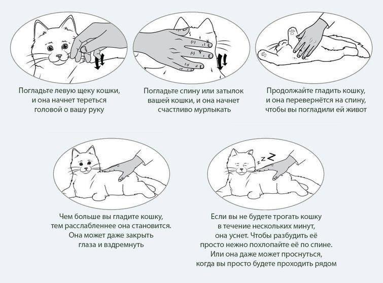 Как приручить кошку. почему кошка не сидит на руках, поведение кошки