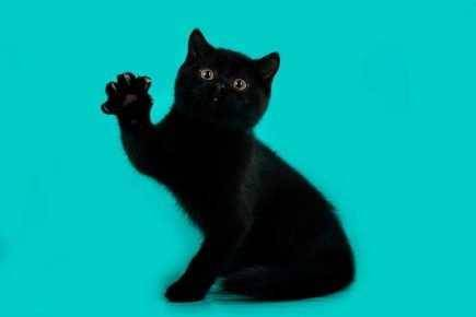 Как назвать кошку и кота черного цвета?