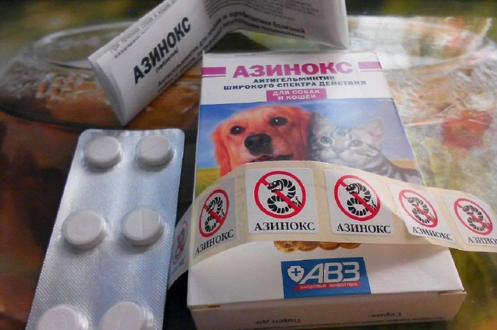 Азинокс для кошек: инструкция по применению таблеток от глистов, дозировка