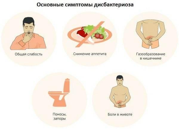 Дисбактериоз у собаки - симптомы и лечение препаратами, диетой