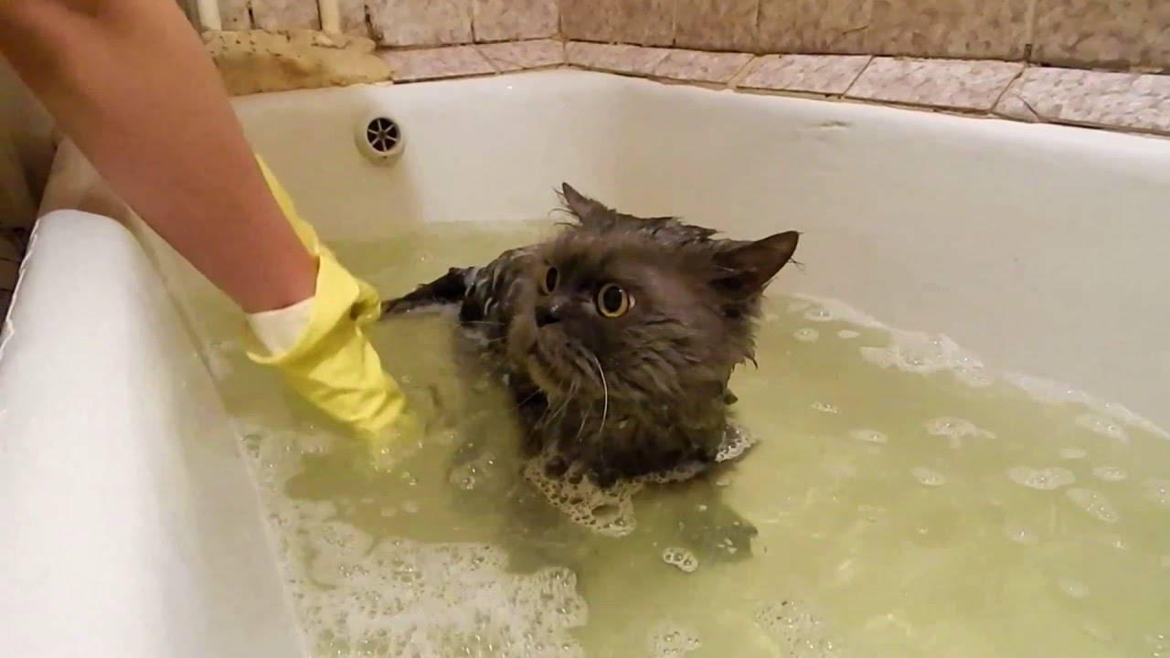 Как купать котенка правильно?