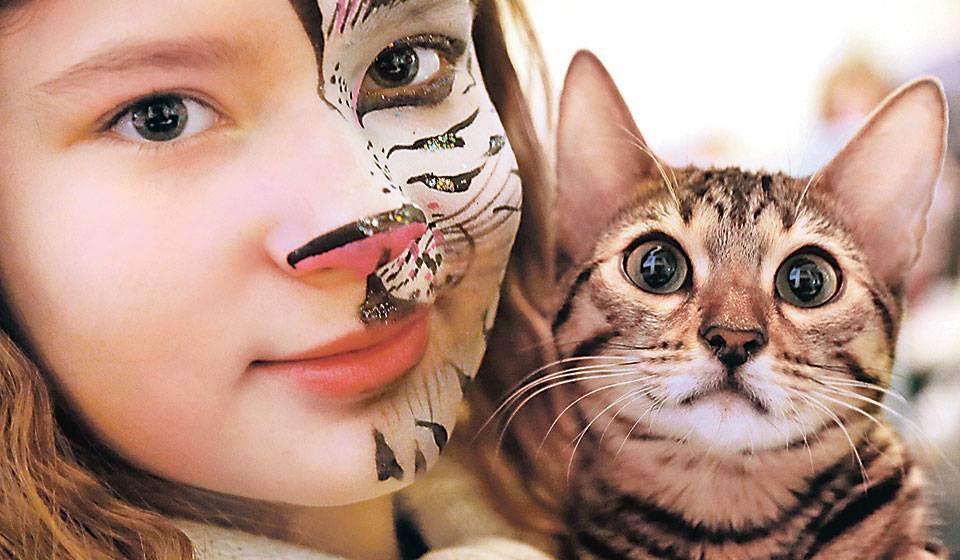 Аллергия у кошки спасти