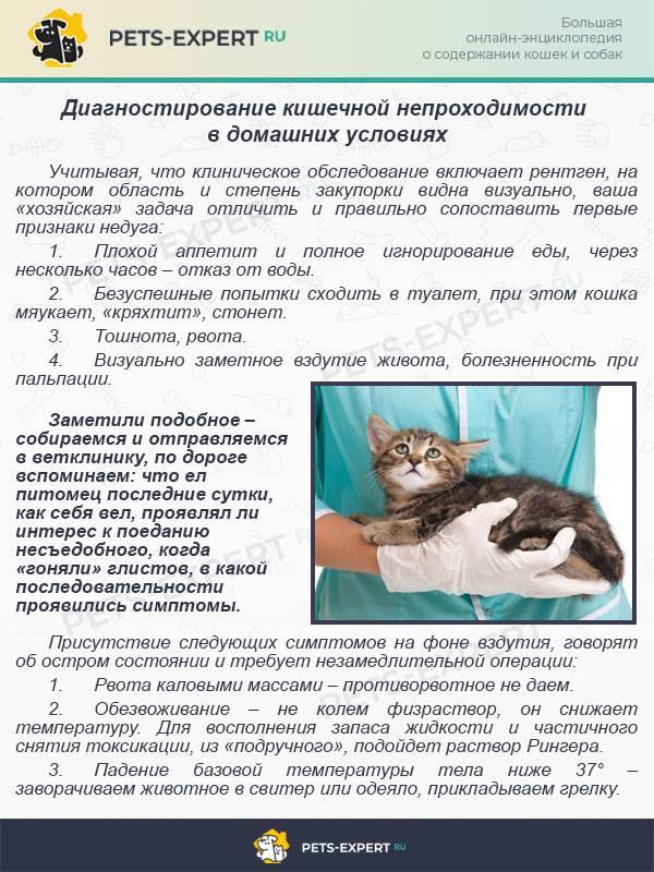 Частичная непроходимость кишечника у кошки | tsitologiya.su