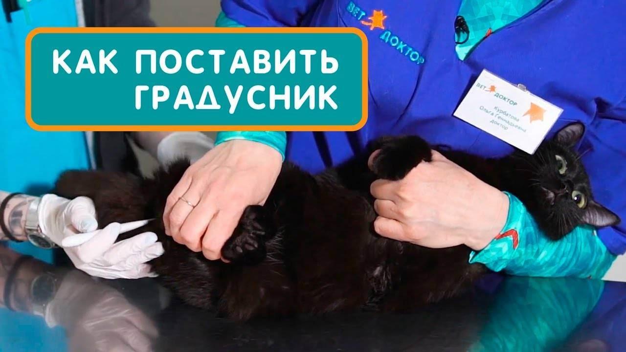 Какой должна быть нормальная температура у кошек и как ее измерить?