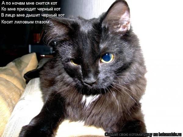 Сонник умер кот. к чему снится умер кот видеть во сне - сонник дома солнца