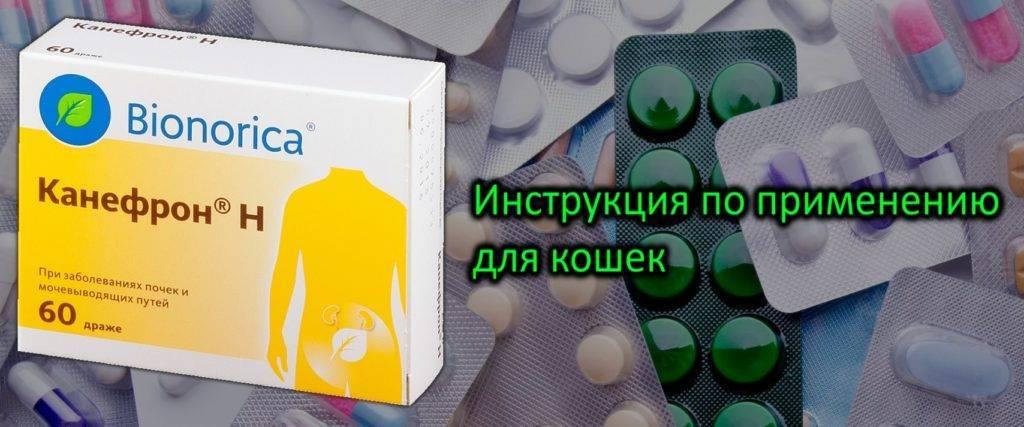 Канефрон для кошек, инструкция по применению: как давать таблетки и капли при мочекаменной болезни?