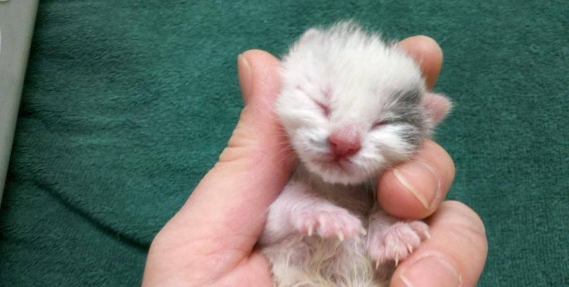 Есть ли у котов пупок – для чего нужен и как найти анатомическую особенность у животного?
