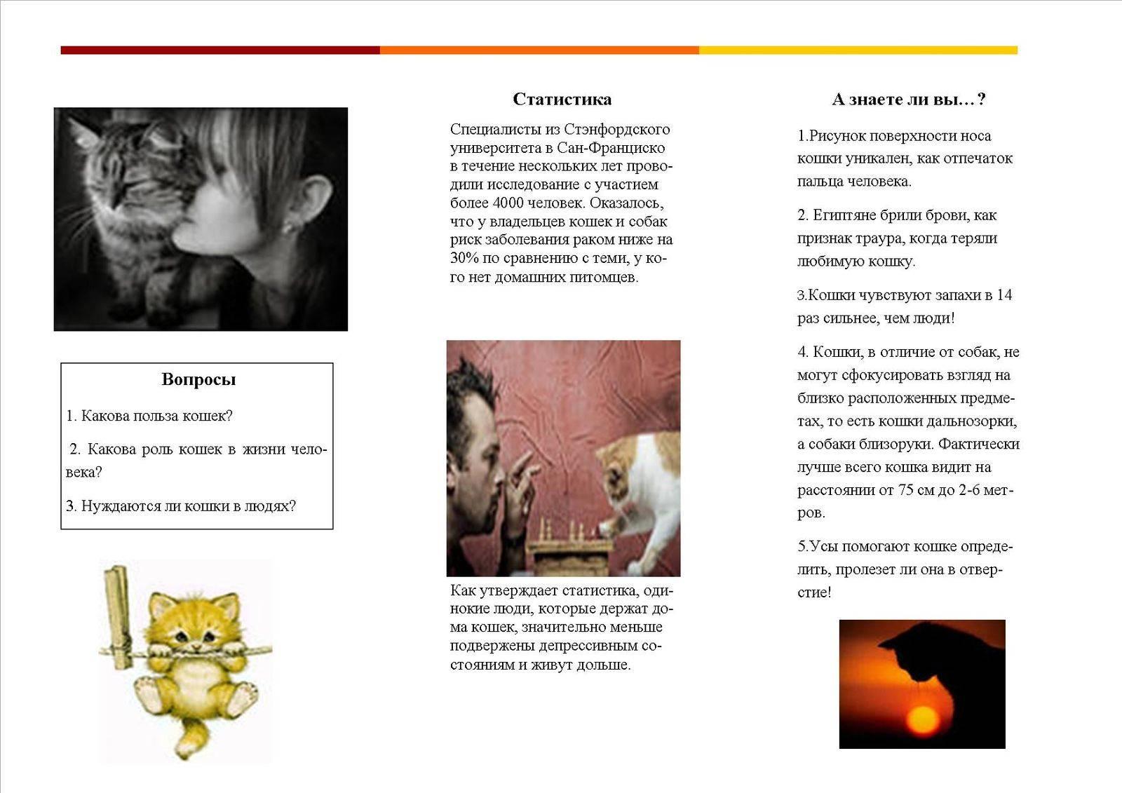 ✅ чем полезны кошки - vsezap24.ru