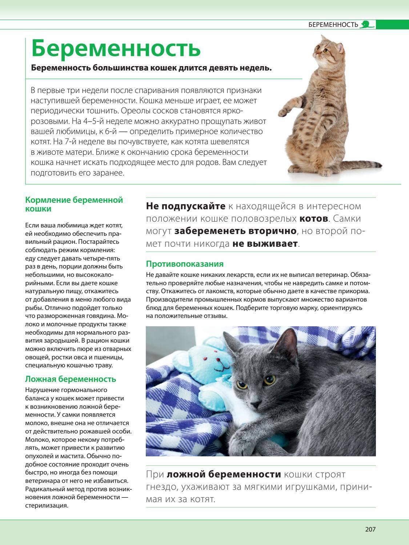 Симптомы и лечение ложной беременности у кошки