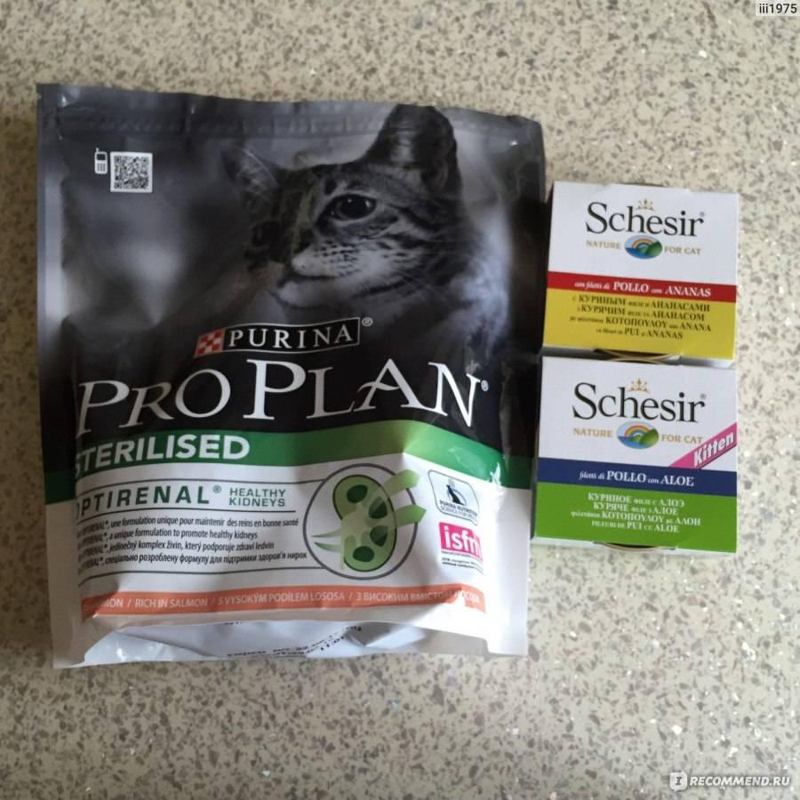 Вазелиновое масло при запорах у кошек: как применять, дозировка
