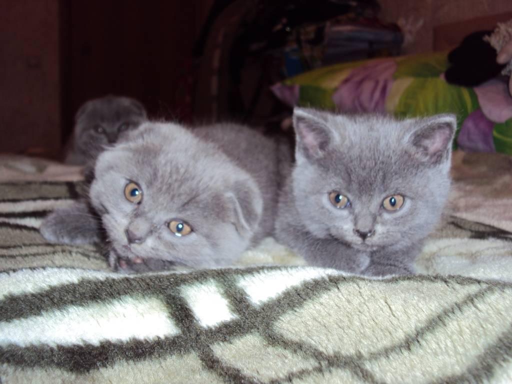 Почему вислоухий кот худой? - проблема и решение