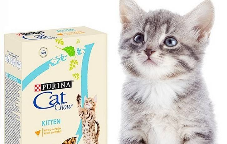 Корм для кошек кэт чау: отзывы и обзор состава | сайт «мурло»