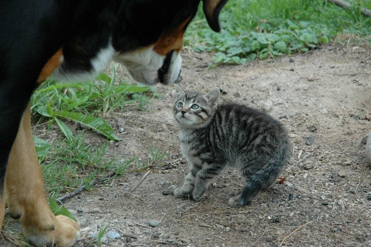Как успокоить кота, кошку или котенка, когда они бесятся, гуляют или испуганы?