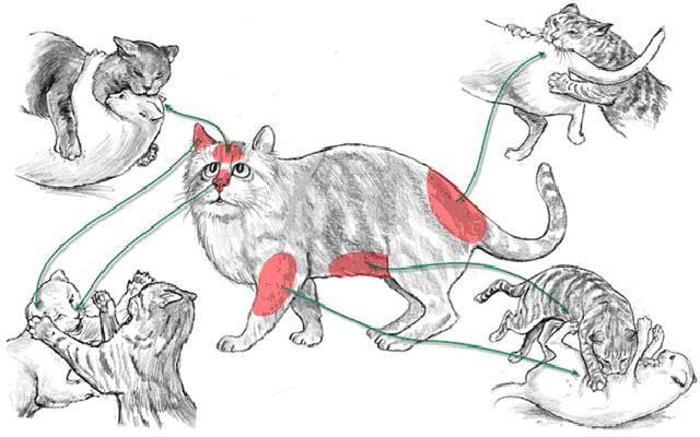 Кошки дерутся — у хозяев нервы шалят