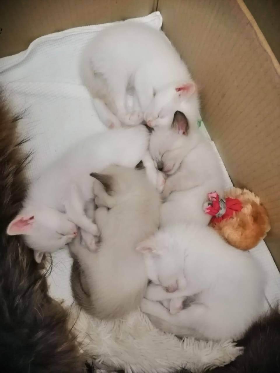 Развитие котят по неделям: внешний вид и особенности развития