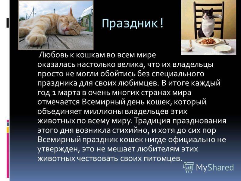 Польза кошек