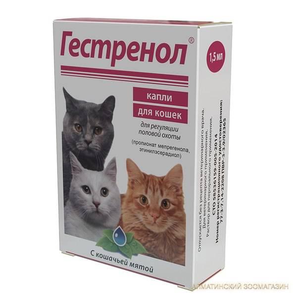 Антисекс-препараты вместо кастрации: капли, уколы и таблетки от гуляния для котов и кошек