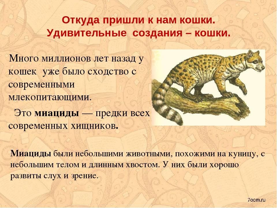 Как кошки появились на руси? какое место они заняли в нашей жизни и культуре? — 4 лапки