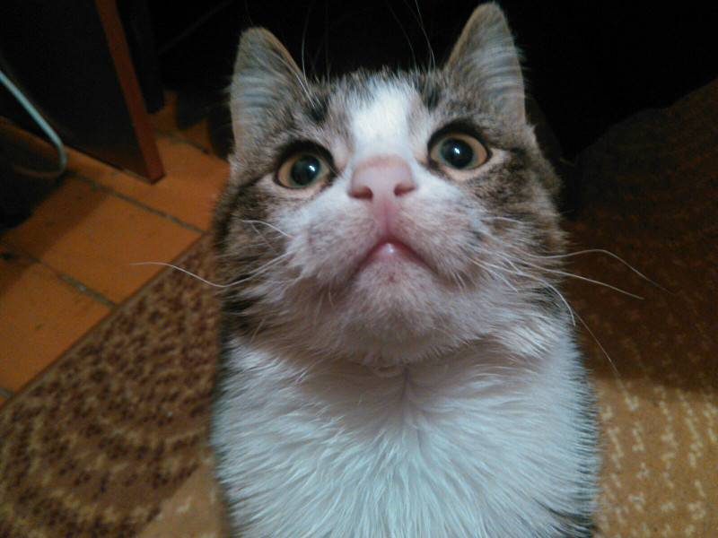 Почему у кота выпадают усы, что делать и как. у кошки выпадают усы, причины выпадения | дачная жизнь