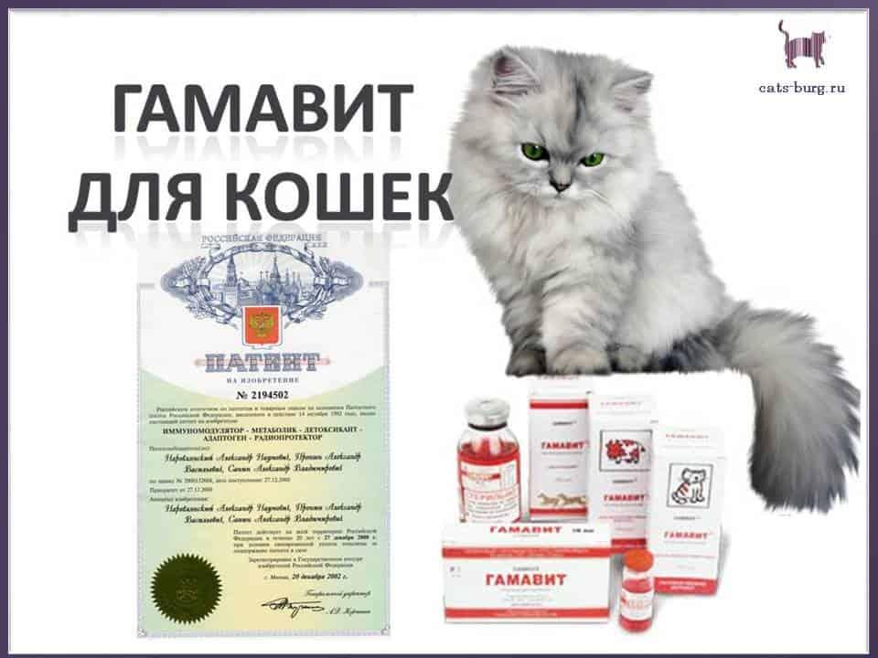 Обзор препарата гамавит для кошек: инструкция по применению, отзывы