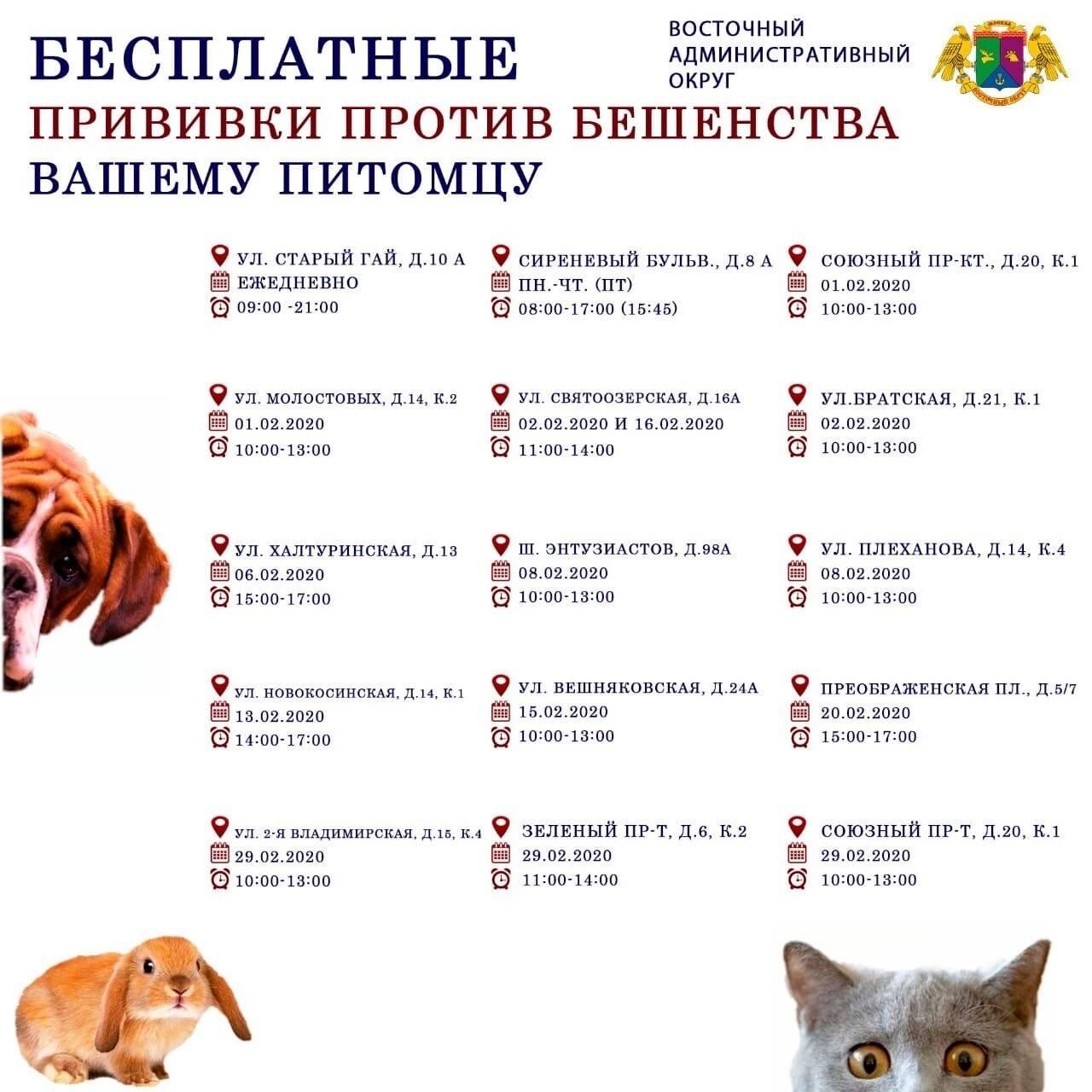 Бешенство кошек: как часто делают прививки, правила вакцинации, период действия препаратов
