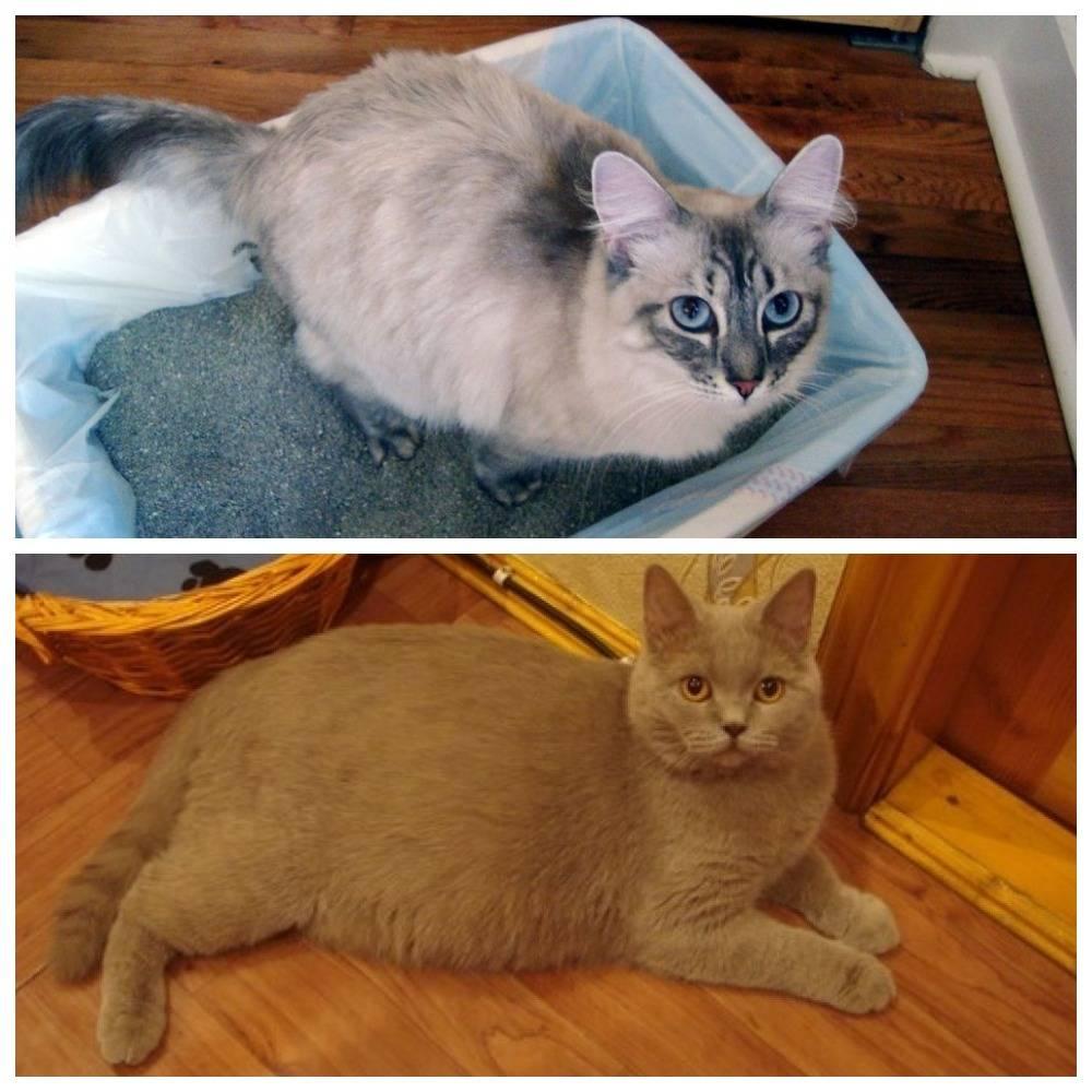 Как сделать коту клизму в домашних условиях как сделать коту клизму в домашних условиях