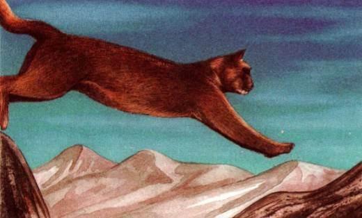 Андская кошка (leopardus jacobitus): фото, интересные факты