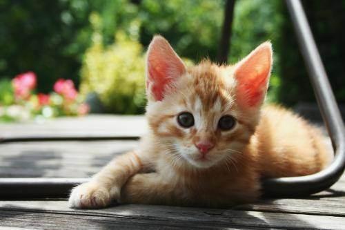 Русские имена для котов и кошек: список простых красивых, популярных и прикольных кошачьих имен для котят-девочек и мальчиков