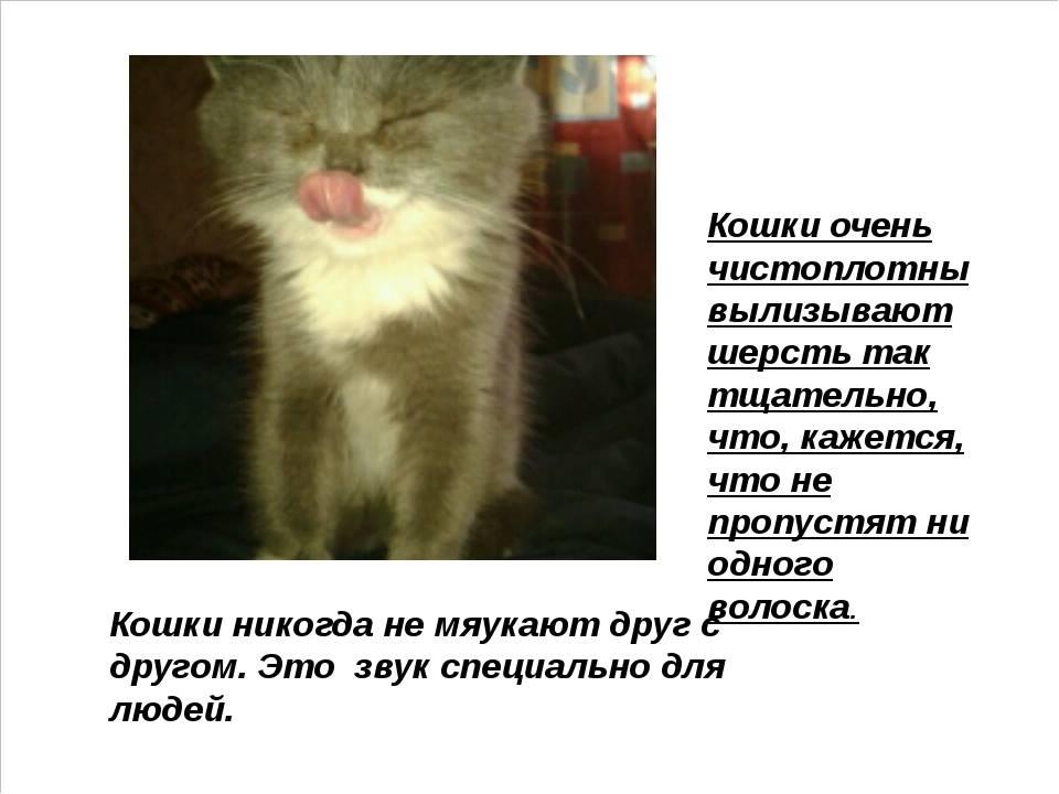 Почему котенок мяукает без причины