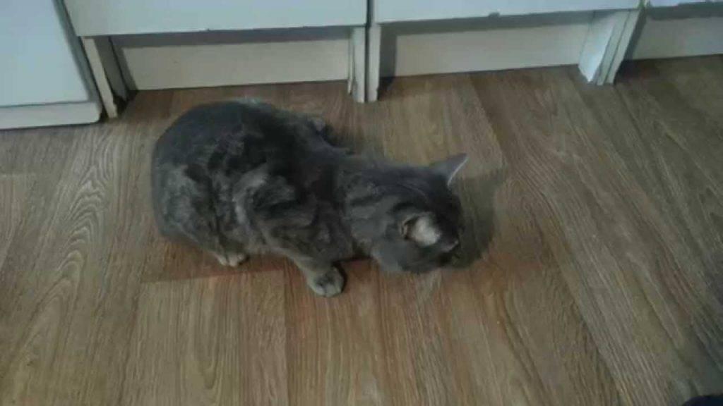 Что делать если кошка чихает